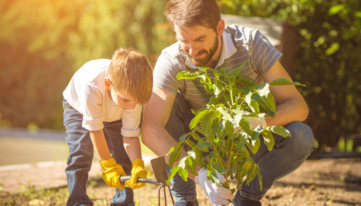 dad-and-son-plant-tree